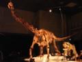 [恐竜]マシャカリサウルス(左)とアウカサウルス