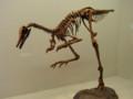 [恐竜]パタゴニクス