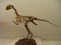 [恐竜]アナビセティア