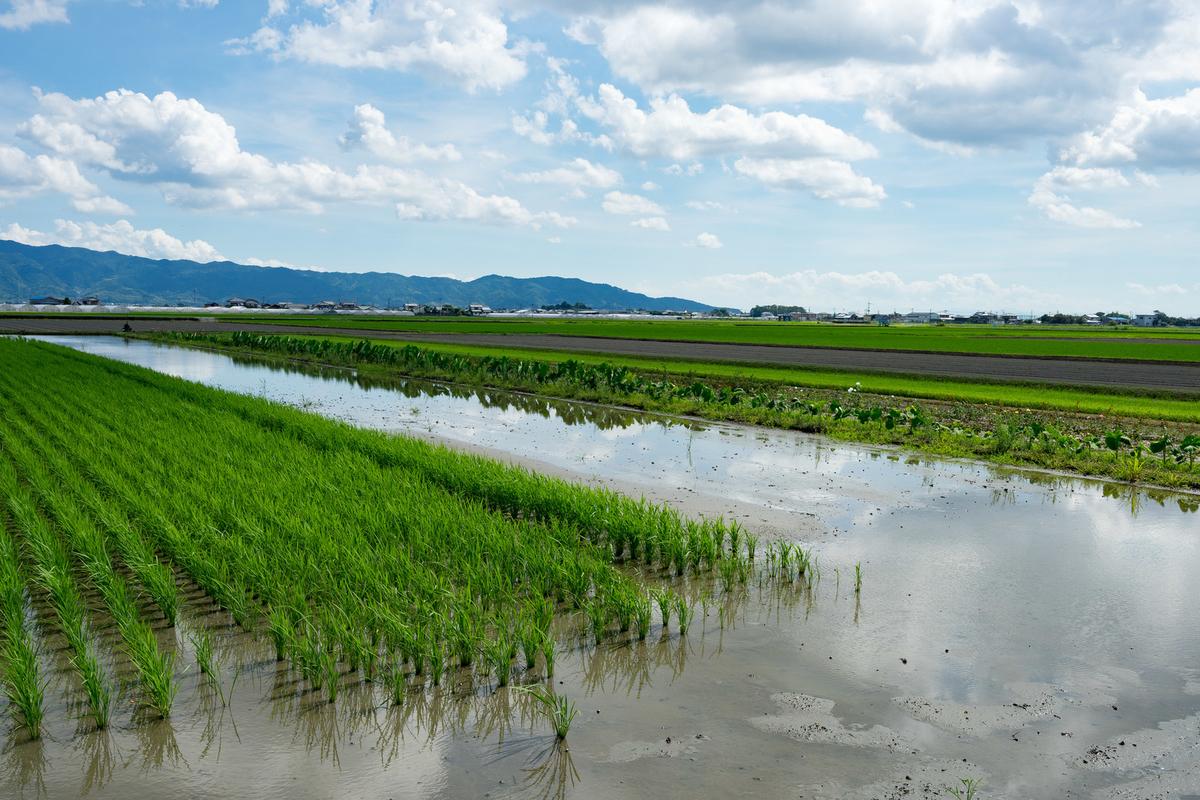 田んぼ風景