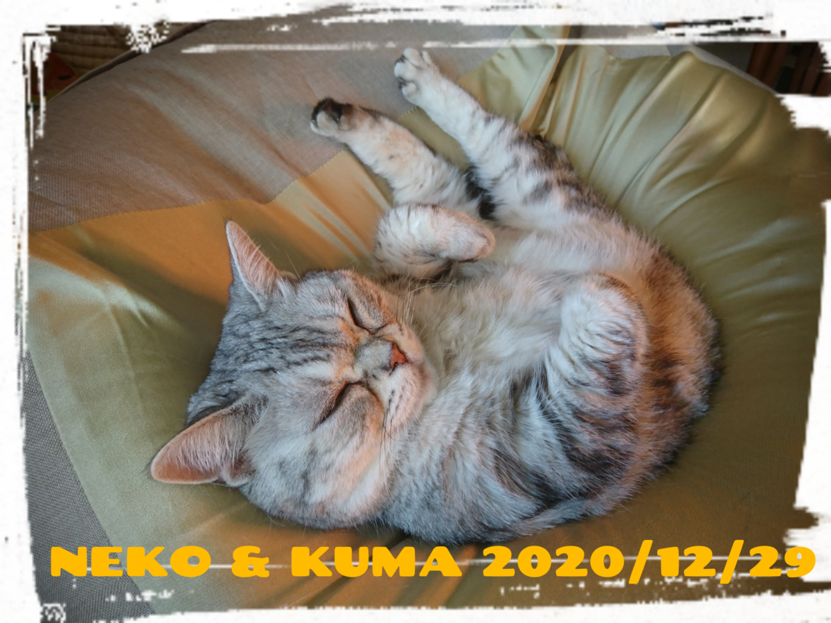 f:id:wasurenagusa7531kuma:20201229103012p:plain