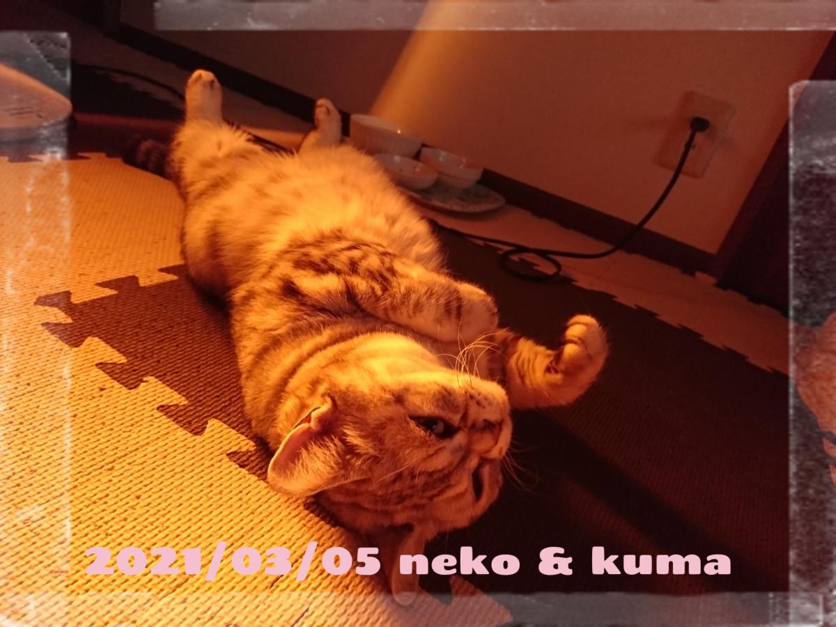 f:id:wasurenagusa7531kuma:20210307103735p:plain