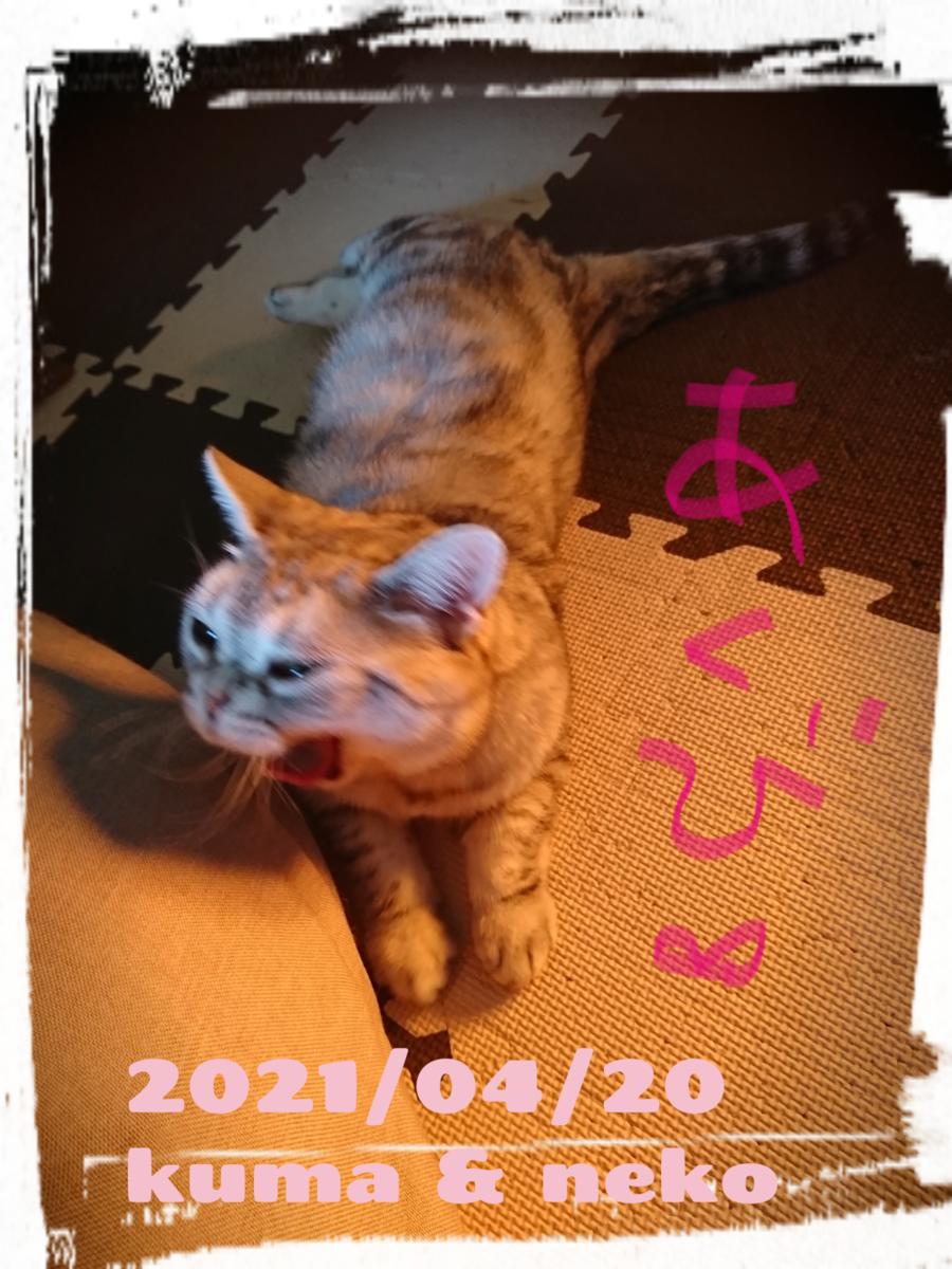 f:id:wasurenagusa7531kuma:20210422182215p:plain