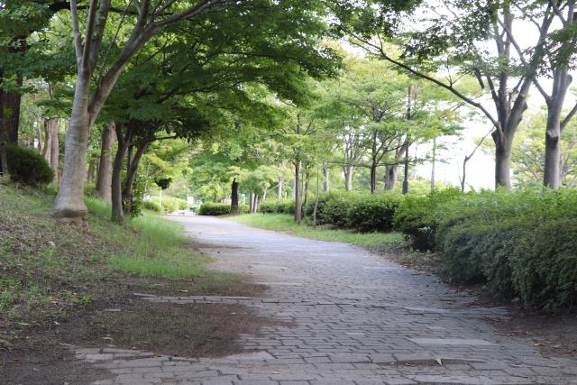 木々が生い茂る散歩道