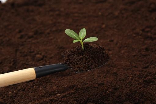 土から出た新芽