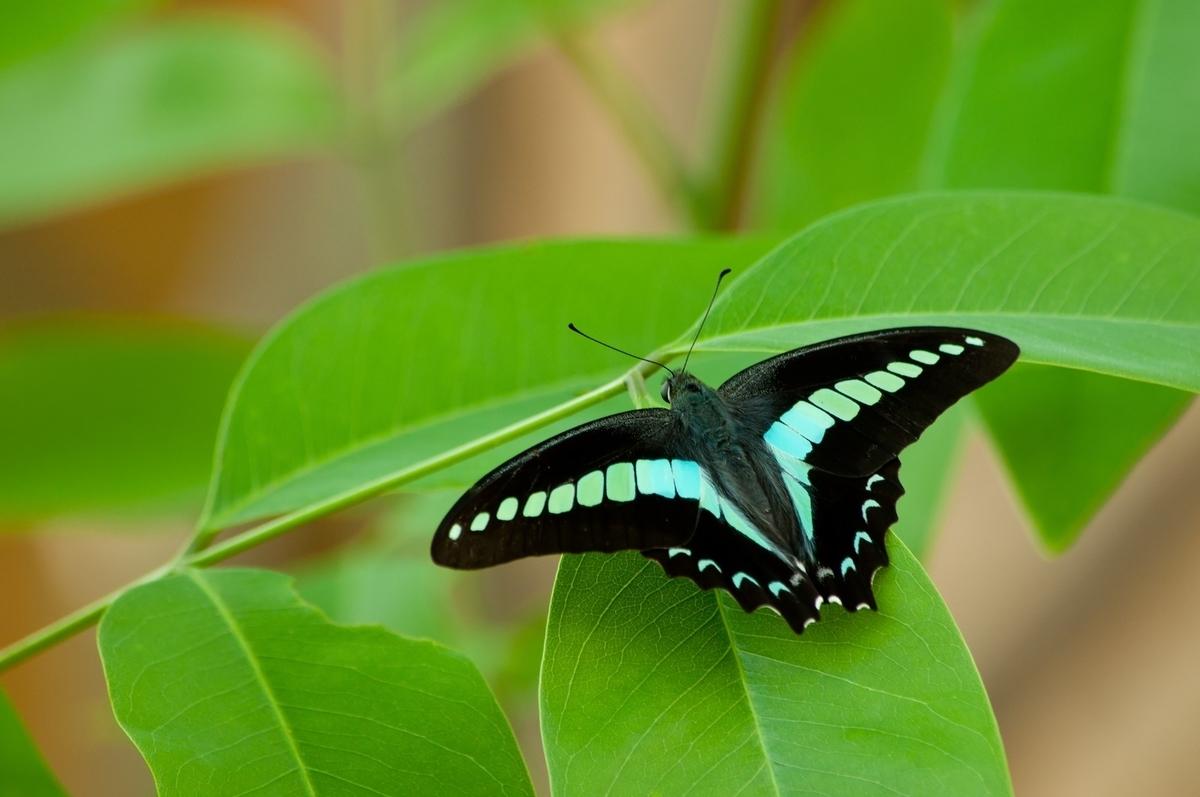 葉につく蝶々