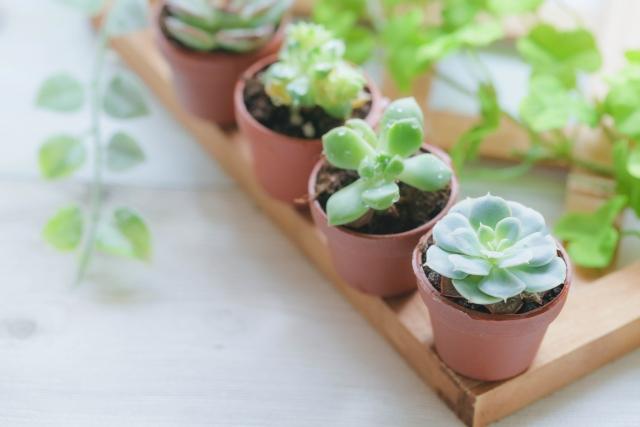 小さな多肉植物