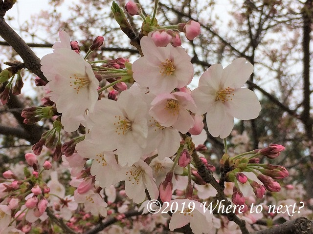 f:id:watanosumiyoshi:20190318231149j:plain