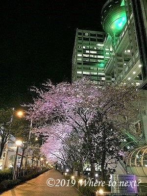 f:id:watanosumiyoshi:20190318231248j:plain