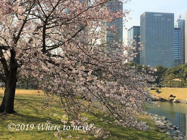 f:id:watanosumiyoshi:20190319224508j:plain