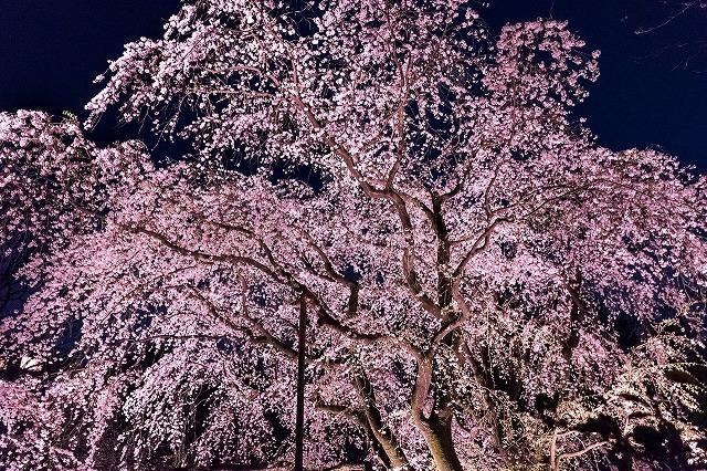 f:id:watanosumiyoshi:20190321175107j:plain