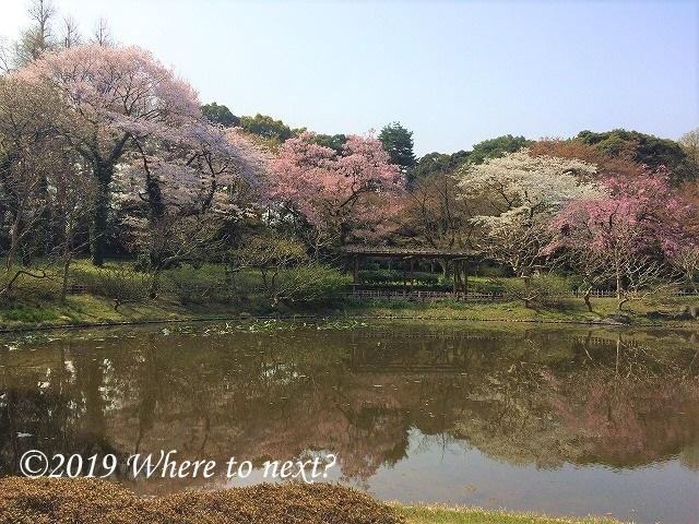 f:id:watanosumiyoshi:20190321232610j:plain