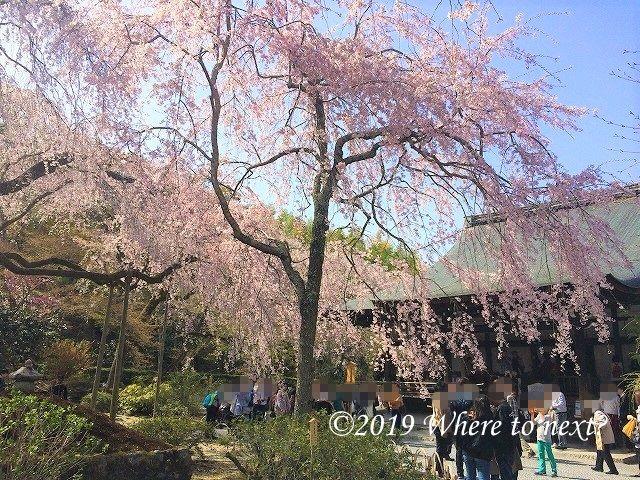 f:id:watanosumiyoshi:20190326003509j:plain