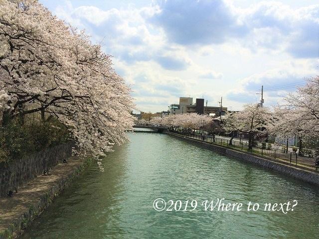 f:id:watanosumiyoshi:20190326235201j:plain
