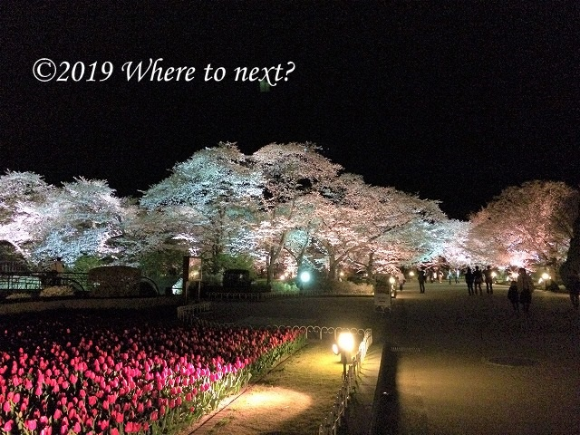 f:id:watanosumiyoshi:20190326235332j:plain