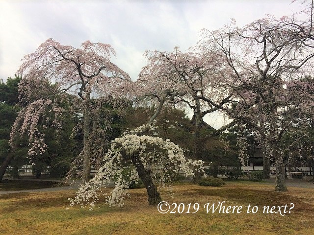 f:id:watanosumiyoshi:20190328232117j:plain