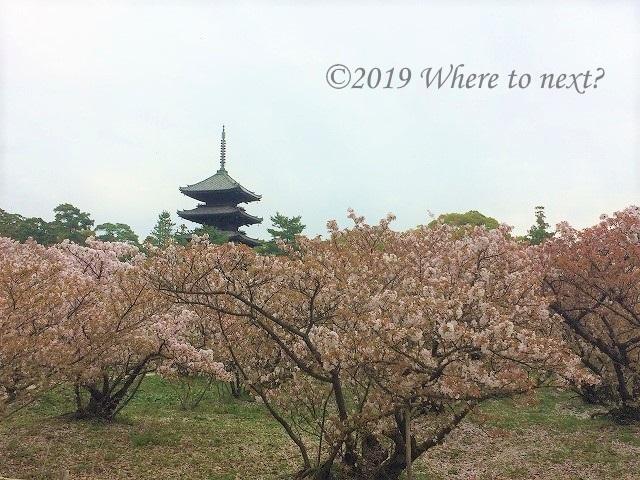 f:id:watanosumiyoshi:20190328232656j:plain