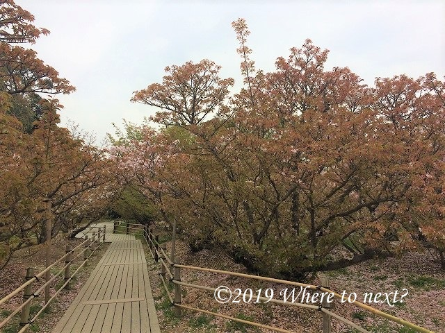 f:id:watanosumiyoshi:20190328232926j:plain
