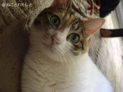 f:id:watashitonekoto:20170821051338j:plain