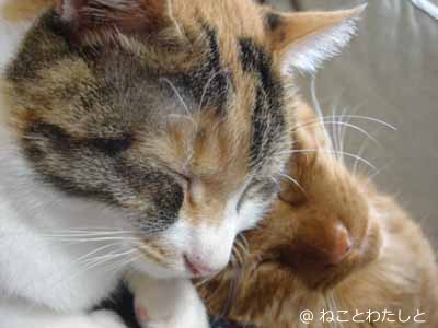 f:id:watashitonekoto:20170821144803j:plain