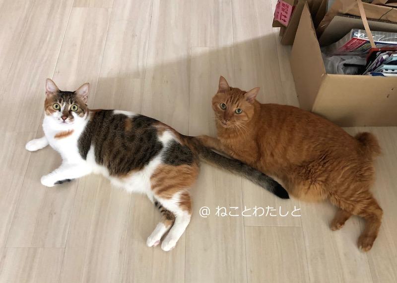 f:id:watashitonekoto:20190828235202j:plain