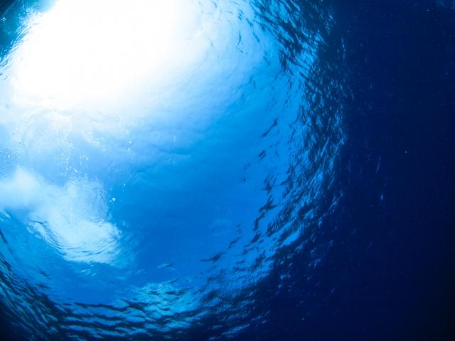 水中から水面を見上げる