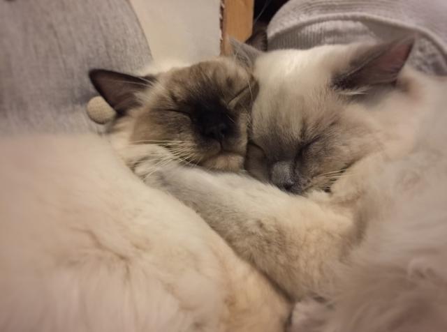 ぎゅっと抱きしめ合って眠る猫たち