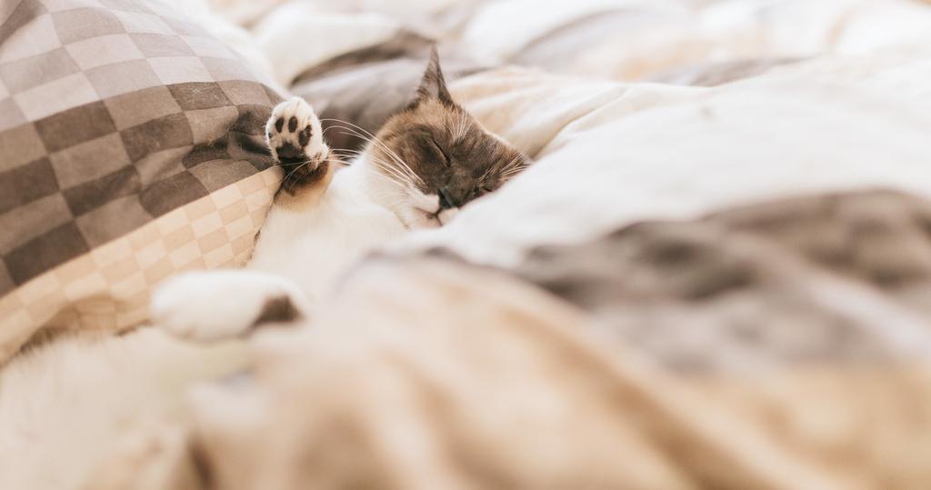 ふかふかの布団で眠る猫