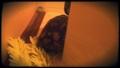 ギリシャリクガメのガブ