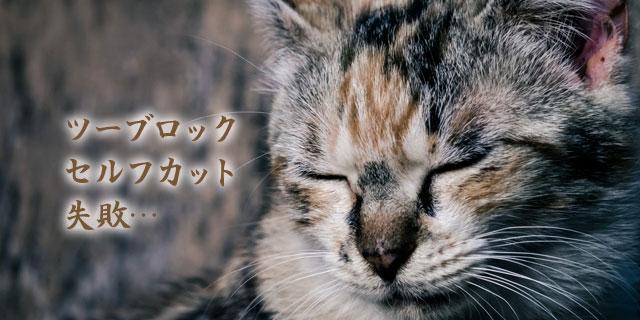 f:id:web-minako:20160726131453j:plain