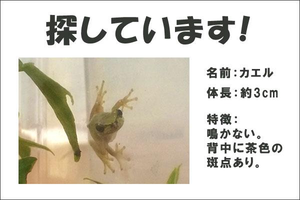 f:id:web-minako:20160906150506j:plain