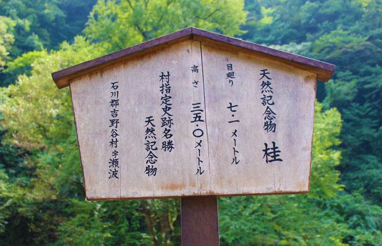 瀬波川キャンプ場 天然記念物