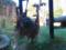 いしかわ動物園 ウランウータン