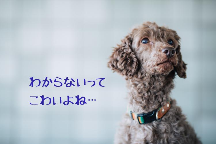 f:id:web-minako:20170411235933j:plain