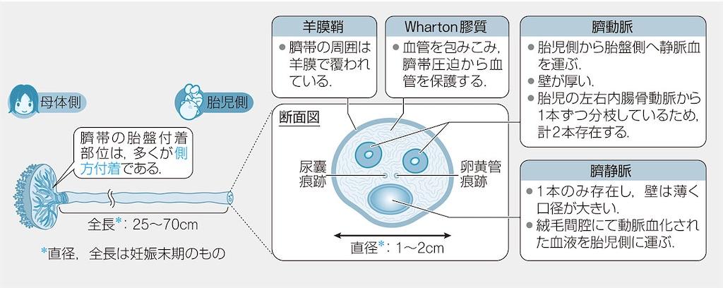 f:id:web-shikentaisaku:20201028000904j:image