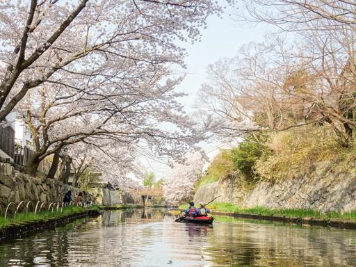 八幡掘の桜並木