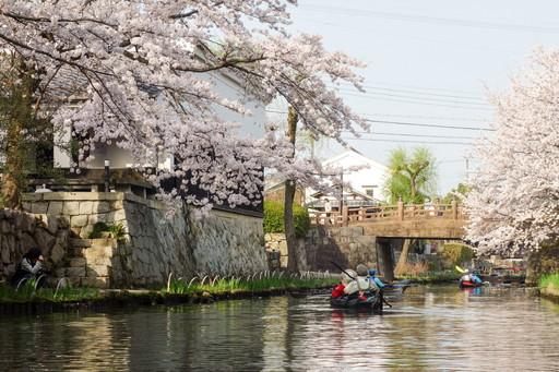 八幡掘の桜と橋