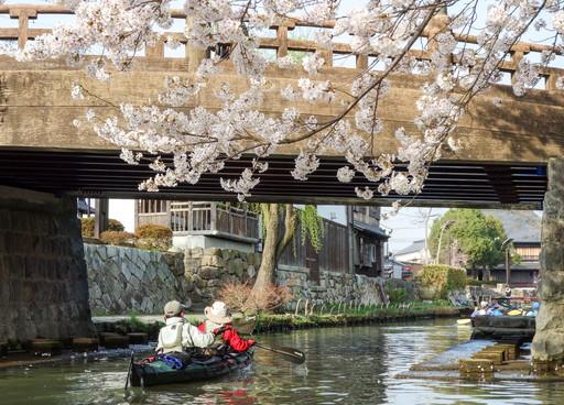 八幡掘の桜と橋2