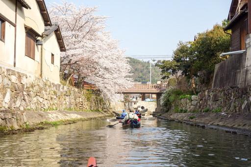 八幡掘の石垣と桜