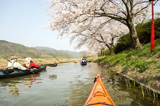 水郷の桜並木
