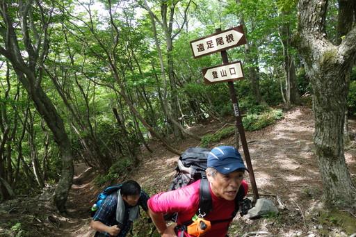 遠足尾根登山道