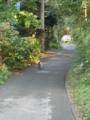 [猫]2006