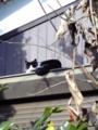 [猫]2008