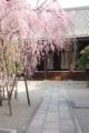 [奈良][桜]