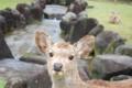 [奈良][鹿]
