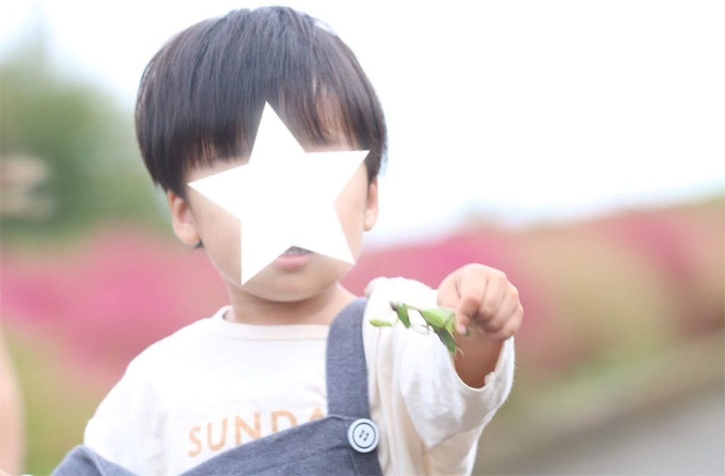 f:id:whats-kids:20191024183744j:image
