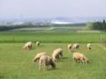 羊丘展望台