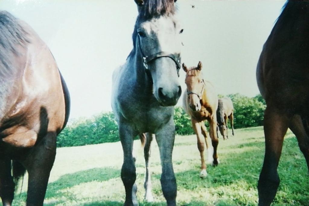 5頭の子馬の写真。撮影者の周りに集まってきているのがわかる。