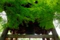 京都新聞写真コンテスト  初夏の癒し寺