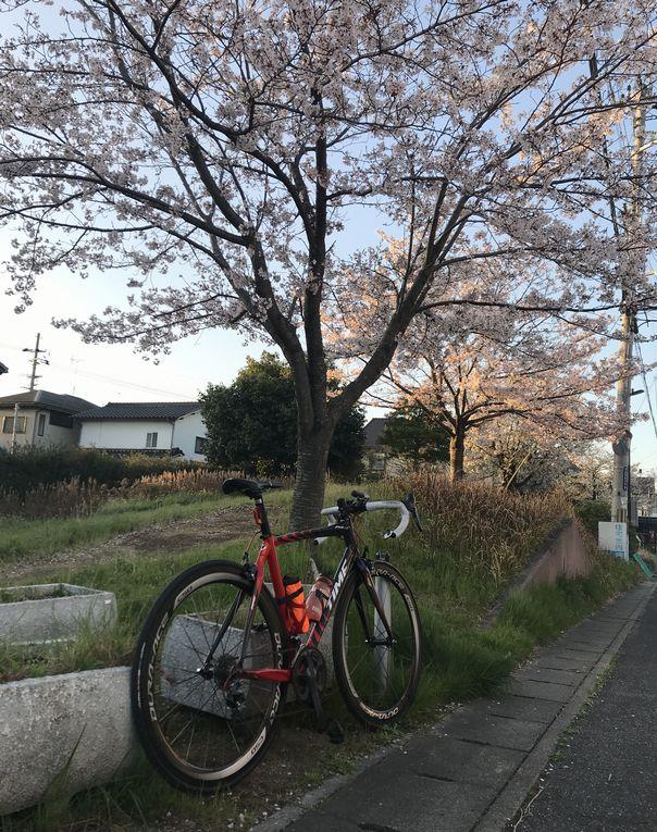 f:id:whitecollarcyclist:20190409102714j:plain
